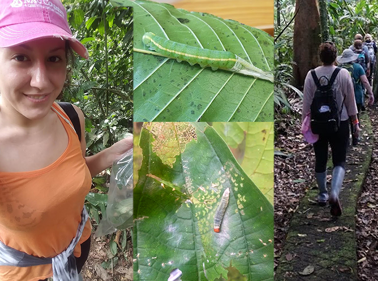 """NAU Country's Eden Schneider was selected to participate in the """"Climate Change and Caterpillars in Costa Rica"""" expedition that was stationed at the La Selva Biological Station in Costa Rica."""